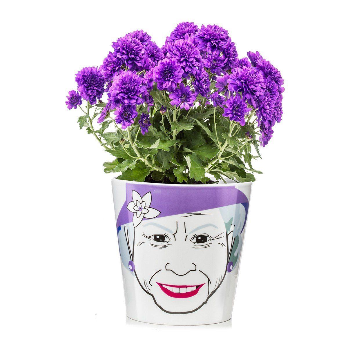 Blomkruka Flower-Power