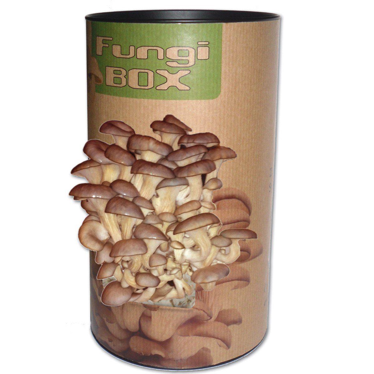 Fungi Box Svampodling