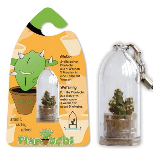 Plantochi – nyckelring med kaktus
