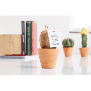 Kort-kaktus