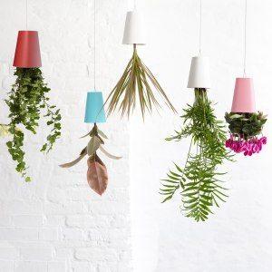 Sky-plants
