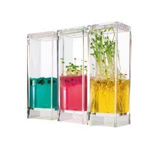 Växtlaboratorium med näringsgelé