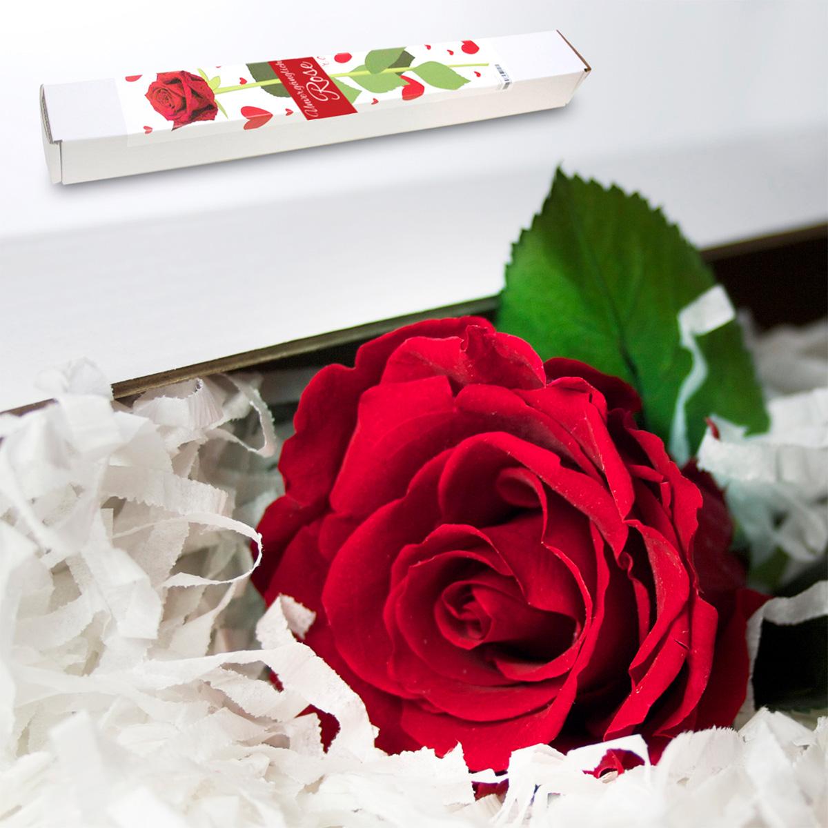 Den för evigt blommande rosen